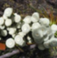 Floral Antena Filhas de Gaia