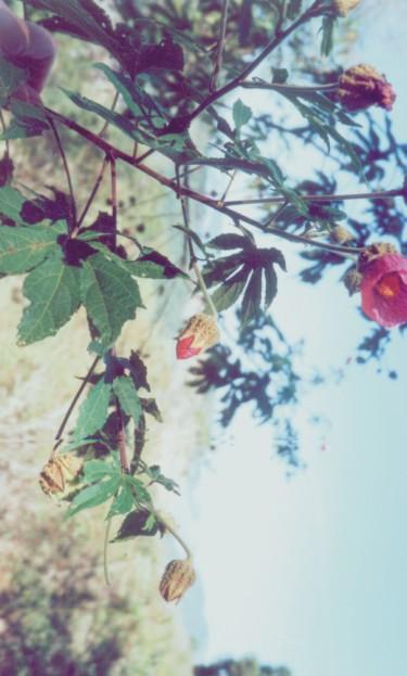 Floral Lanterna do Coração Florais Filhas de Gaia