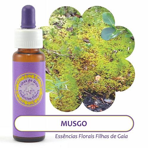 Musgo - Essência Floral