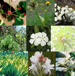 Composto Floral Guerreiro da Luz