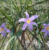 Floral Canela de Ema Filhas de Gaia