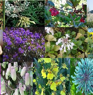 Composto Floral Abundância