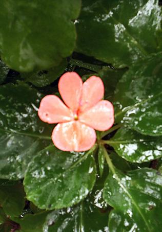 Floral Florais Filhas de Gaia