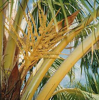 Floral Coco Filhas de Gaia