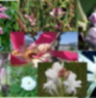 Composto Floral Aconchego