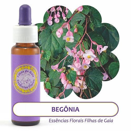 Begônia - Essência Floral