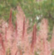 Floral Capim Gordura Filhas de Gaia