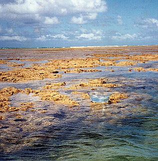 Floral Mãe D'água Filhas de Gaia