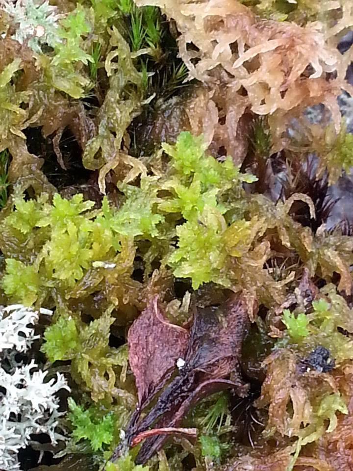 Floral Regeneração Florais Filhas de Gaia