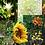 Thumbnail: Spray do Estudante - Composto Floral