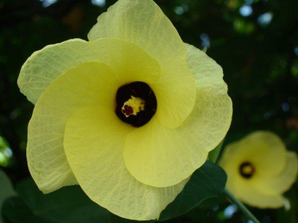 Floral Uvira Florais Filhas de Gaia