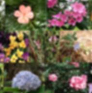 Composto Floral Gentileza