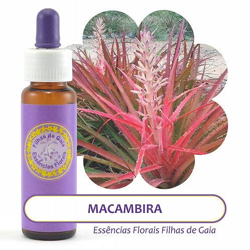 Macambira - Essência Floral