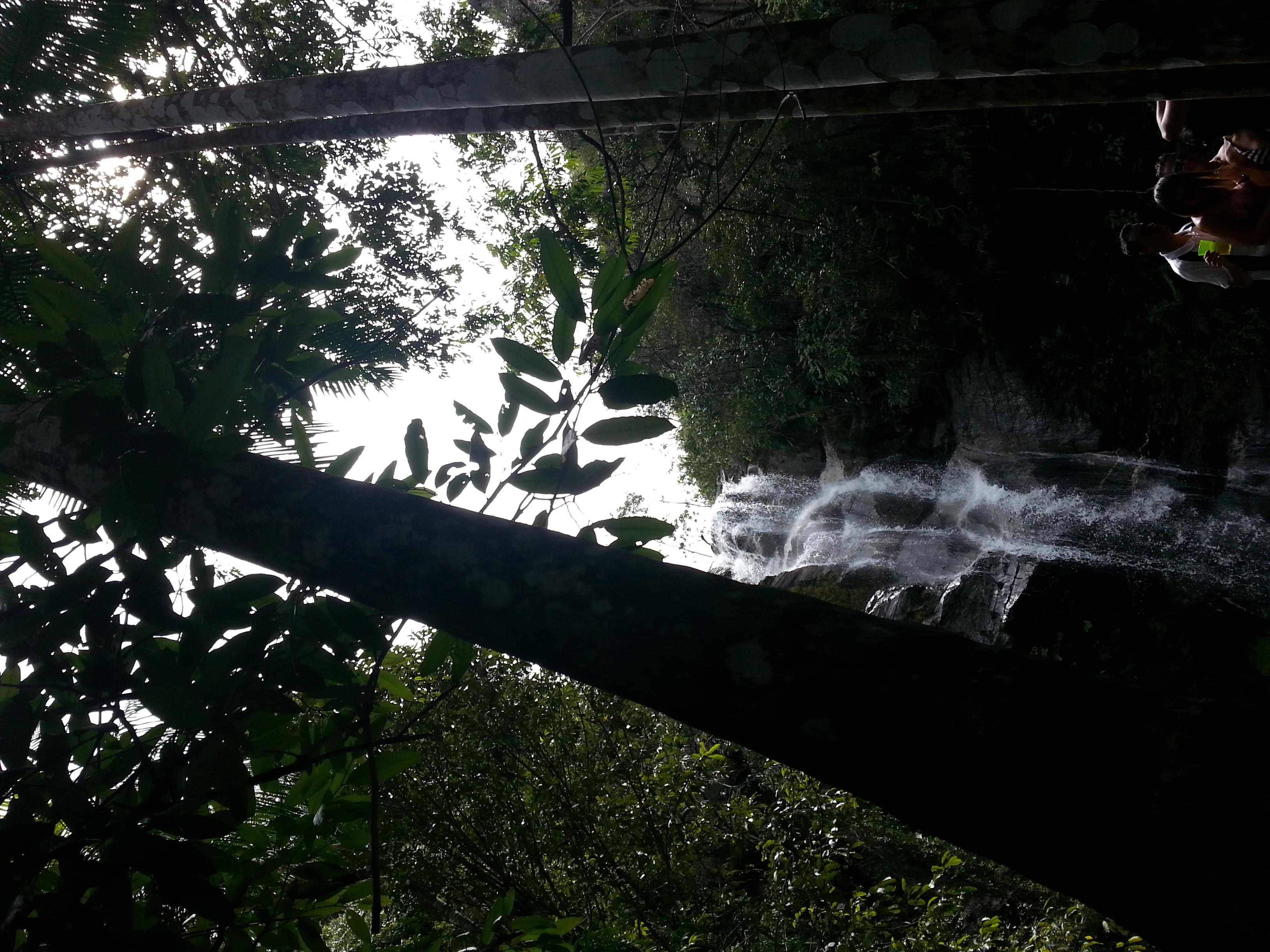 Floral Cachoeira Da Entrega Florais Filhas de Gaia