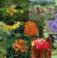 Composto Floral Exaltação da Energia Yang