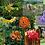 Thumbnail: Exaltação da Energia Yang - Composto Floral
