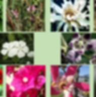 Composto Floral Vôo da Águia