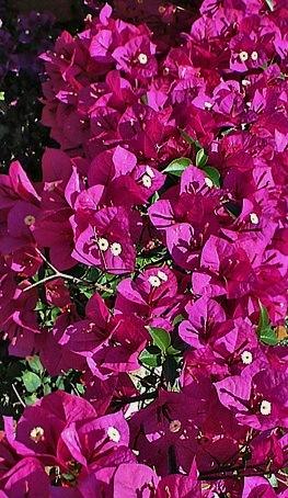 Floral Primavera Florais Filhas de Gaia