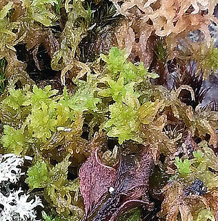 Floral Regeneração Filhas de Gaia