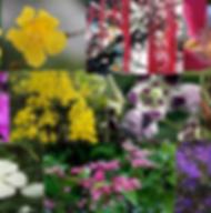 Composto Floral Bálsamo