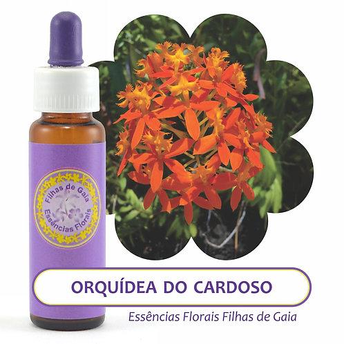 Orquídea do Cardoso - Essência Floral