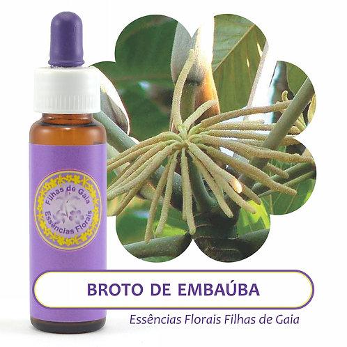 Broto de Embaúba - Essência Floral
