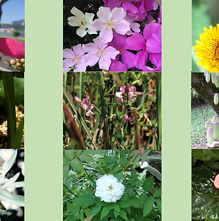 Composto Floral Mãe Loba