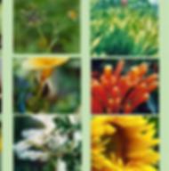 Composto Floral Limites Saudáveis