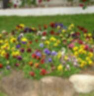 Floral Amor Perfeito Filhas de Gaia
