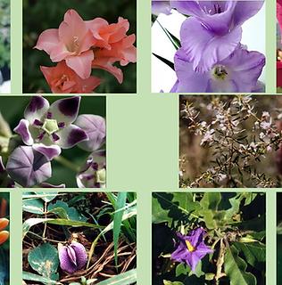 Composto Floral Limpando Trauma Sexual