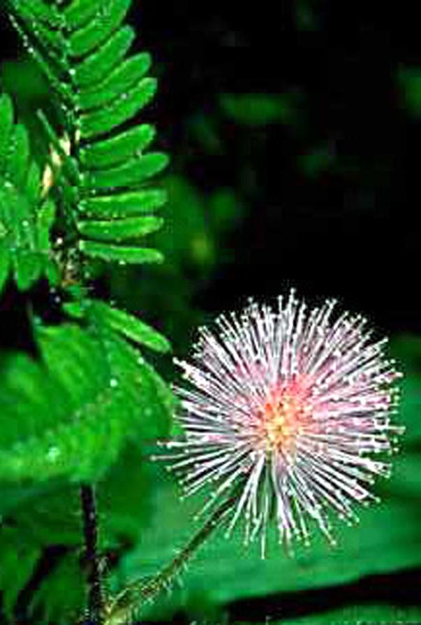 Floral Sensitiva Florais Filhas de Gaia