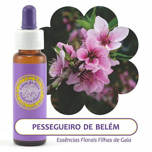 Pessegueiro de Belém  - Essência Floral