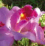 Floral Clatéia Rainha Filhas de Gaia