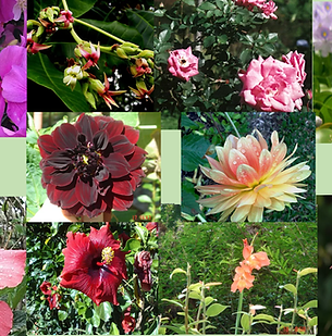 Composto Floral Fêmina