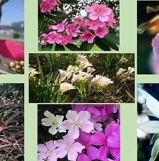 Composto Floral Fraternidade