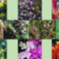 Composto Floral Idosos