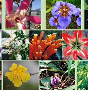 Composto Floral Vênus