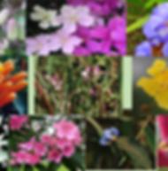 Composto Floral Beija-Flor