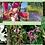 Thumbnail: Borboleta - Composto Floral