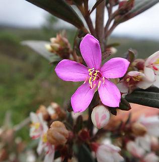 Floral Érica Filhas de Gaia
