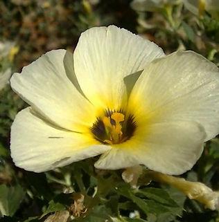 Floral Chanana Filhas de Gaia