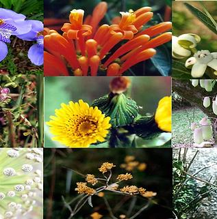 Composto Floral Arco-Íris