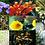 Thumbnail: Arco-Íris - Composto Floral