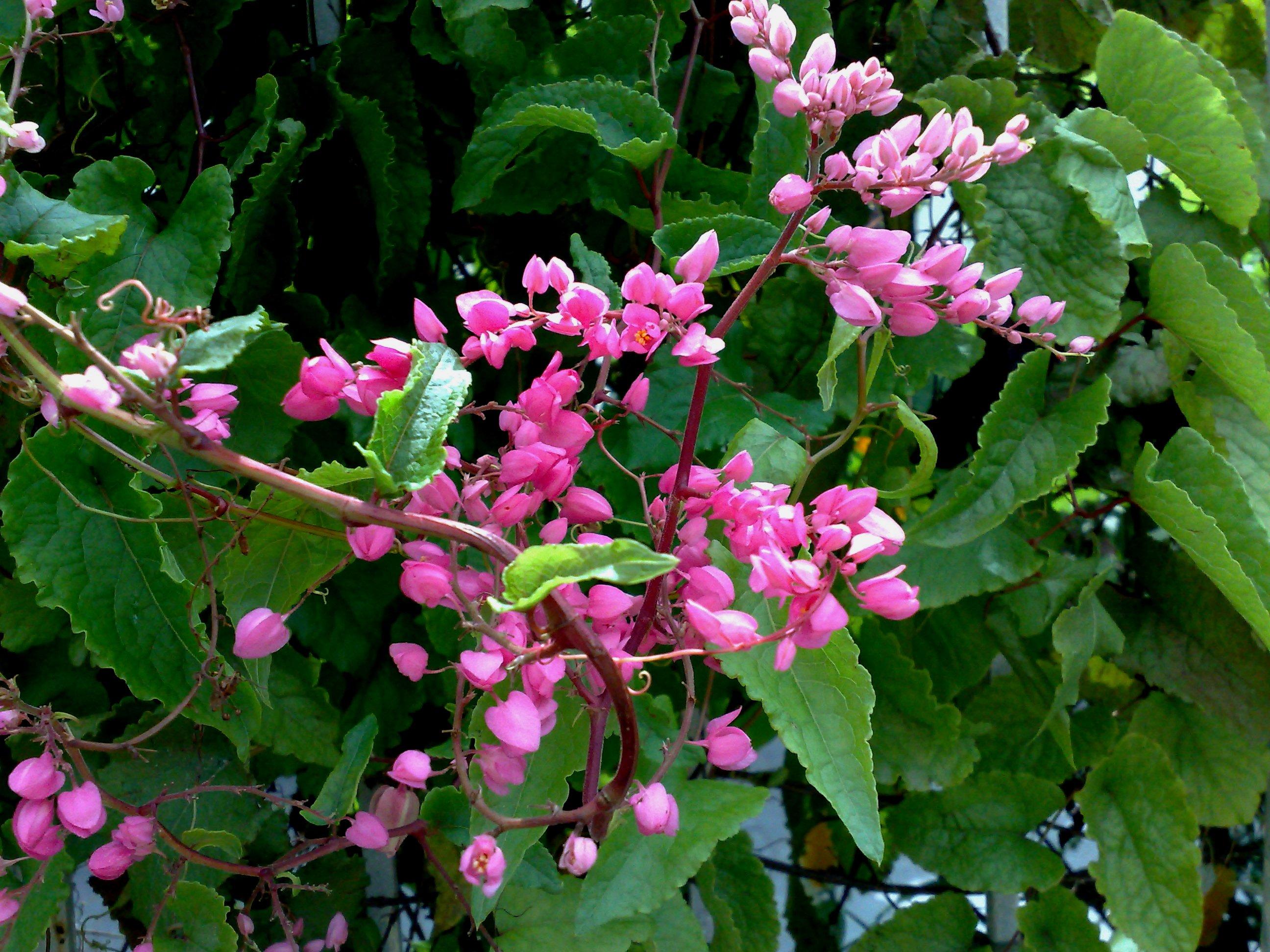 Floral Alegria Florais Filhas de Gaia