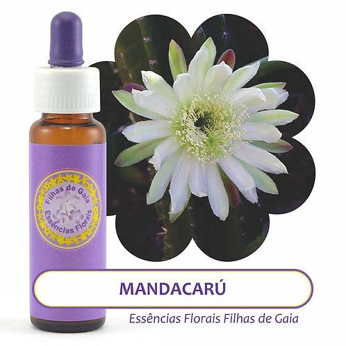 Mandacarú - Essência Floral