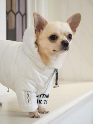 OverGlam Dog Coat
