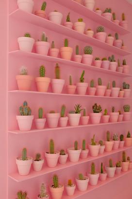 Cacti Wall