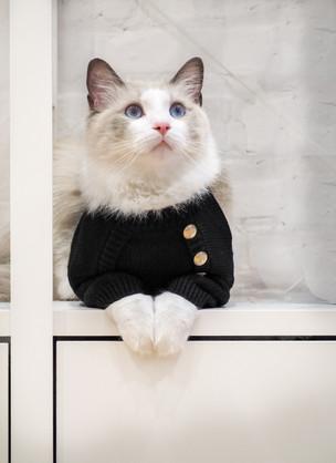 OverGlam Cat