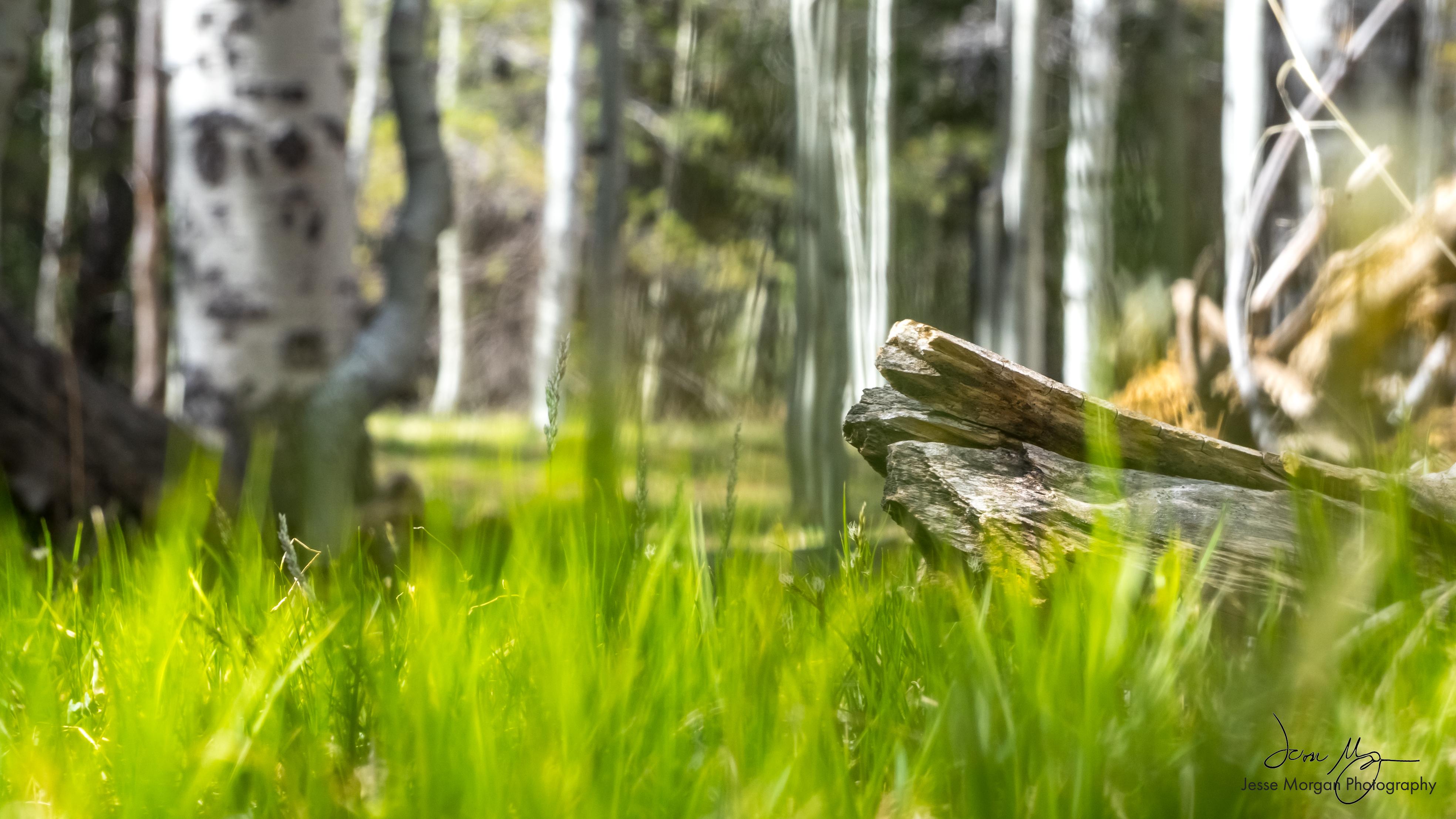 Grass Log