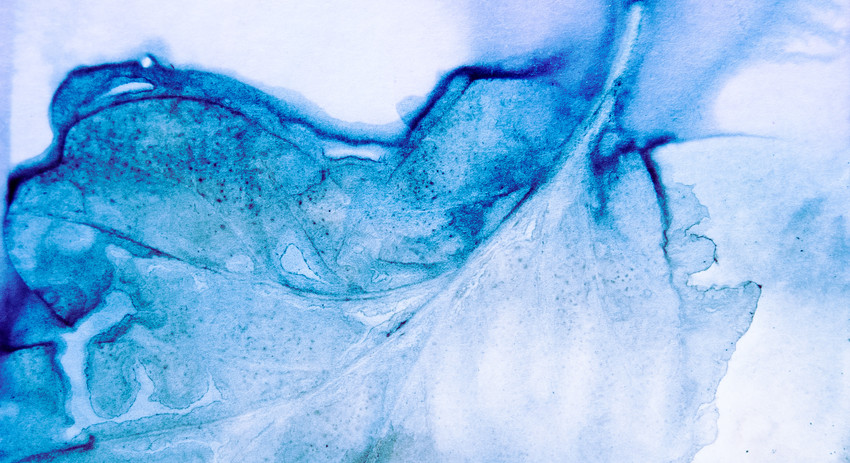 small blue leaf